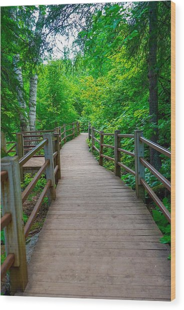 Gooseberry River Trail Wood Print