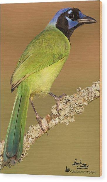 Gorgeous Green Jay Wood Print