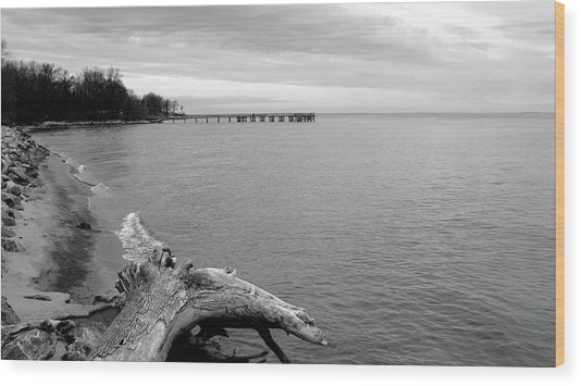 Gray Day On The Bay Wood Print
