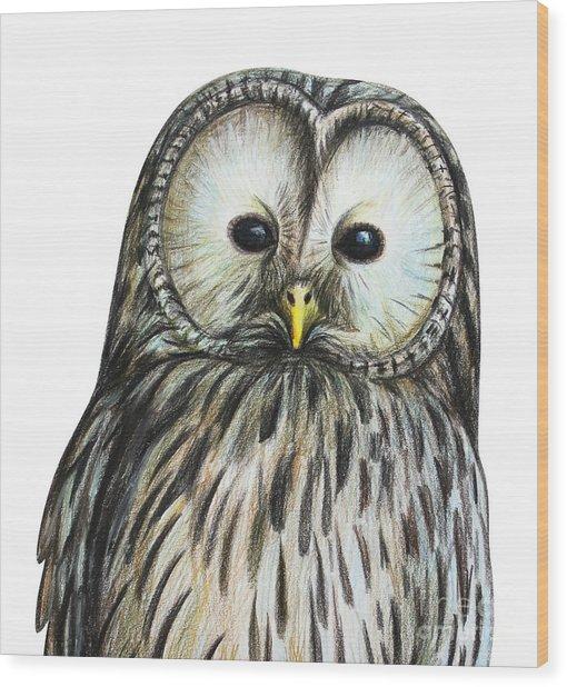 Gray Owl Portrait Drawing Wood Print