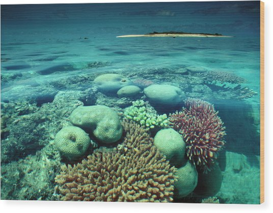 Great Barrier Reef In The Foreground Wood Print by Auscape / Uig