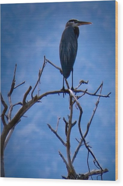 Great Blue Heron 3 Wood Print