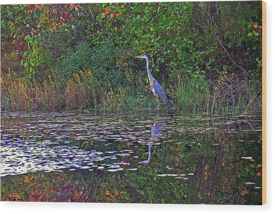 Great Blue Heron In Autumn Wood Print