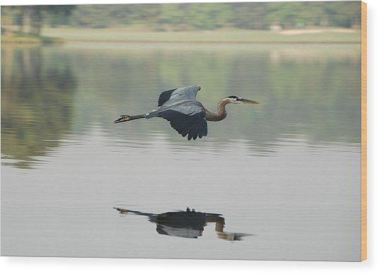 Great Blue Heron In Flight Wood Print by Photo By Hannu & Hannele, Kingwood, Tx
