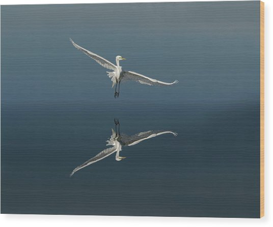 Great Egret Flying With Reflection Wood Print by Adam Jones