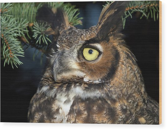 Great Horned Owl 10181801 Wood Print