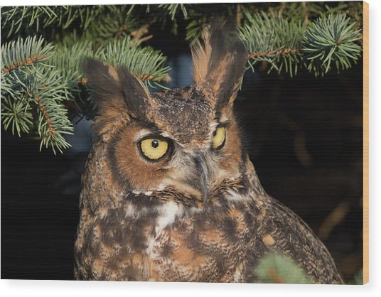Great Horned Owl 10181802 Wood Print