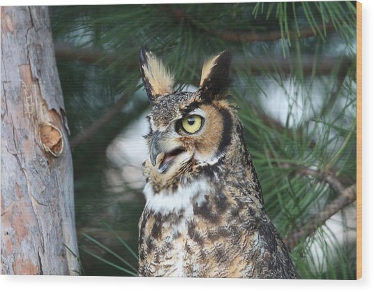 Great Horned Owl 5151801 Wood Print
