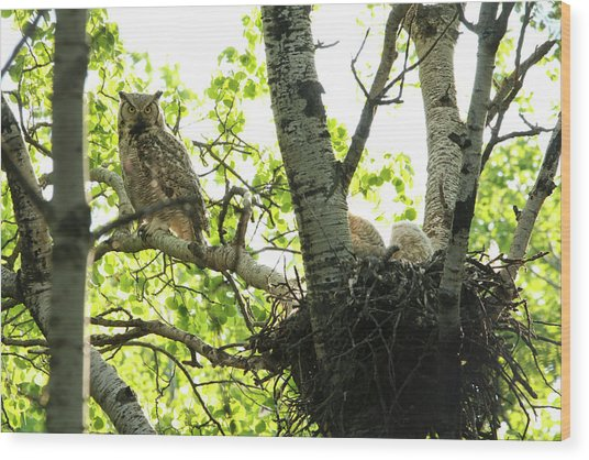 Great Horned Owl And Babies Wood Print