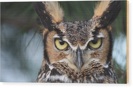 Great Horned Owl Eyes 51518 Wood Print