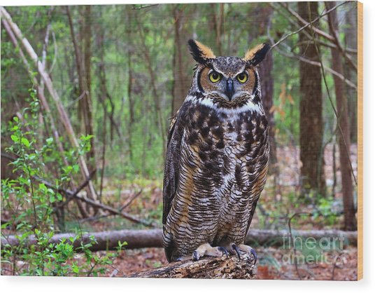 Great Horned Owl Standing On A Tree Log Wood Print