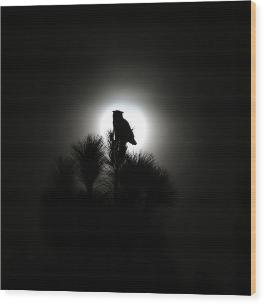 Great Horned Owl With Winter Moon Wood Print by Robin Street-Morris