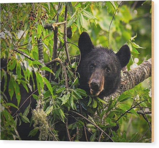 Great Smoky Mountains Bear - Black Bear Wood Print