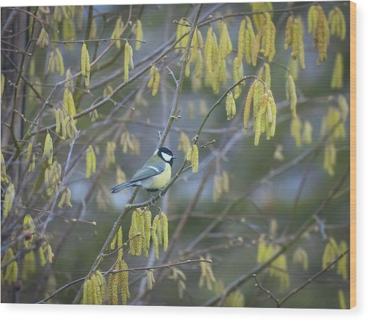Great Tit And Catkins Wood Print