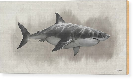 Great White Shark Drawing Wood Print by Steve Goad