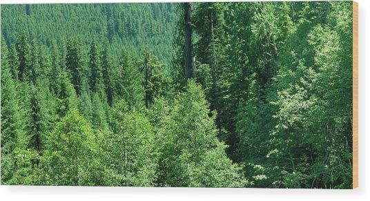 Green Conifer Forest On Steep Hillside  Wood Print