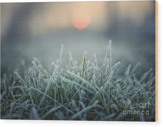 Green Grass With Morning Frost And Red Wood Print by Chromakey