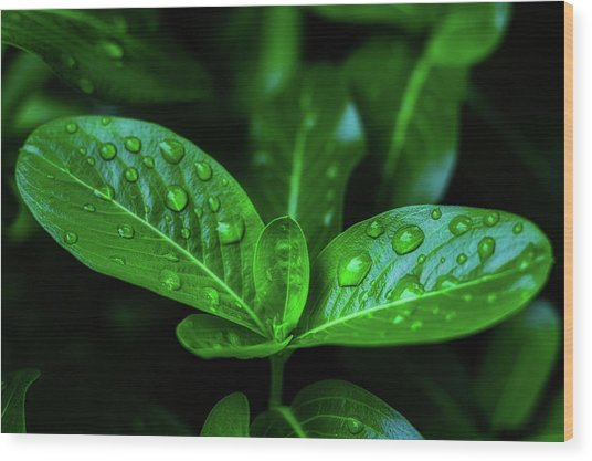 Green Leaf With Water Wood Print