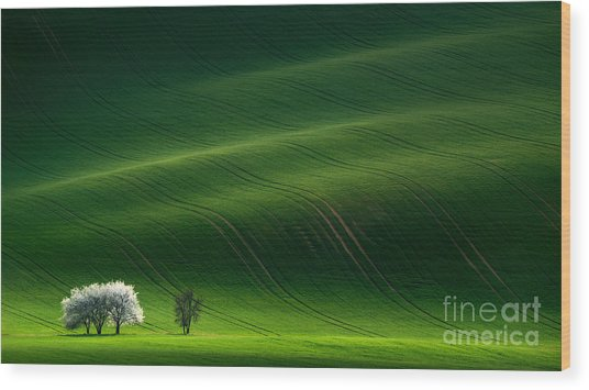 Green Rolling Spring Landscape With Wood Print by Vlad Sokolovsky