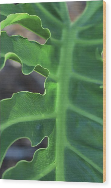Green Space Wood Print