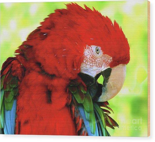 Green-winged Macaw Wood Print