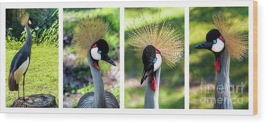 Grey Crowned Crane Gulf Shores Al Collage 1 Wood Print