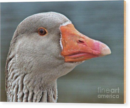 Grey Goose Wood Print