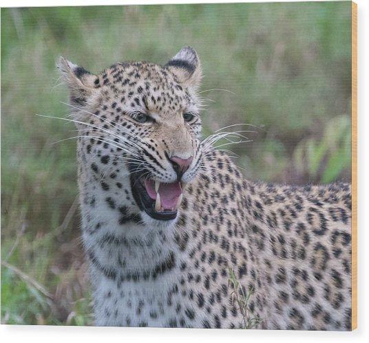 Grimacing Leopard Wood Print