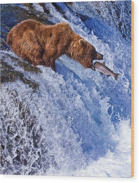 Grizly Bears At Katmai National Park Wood Print