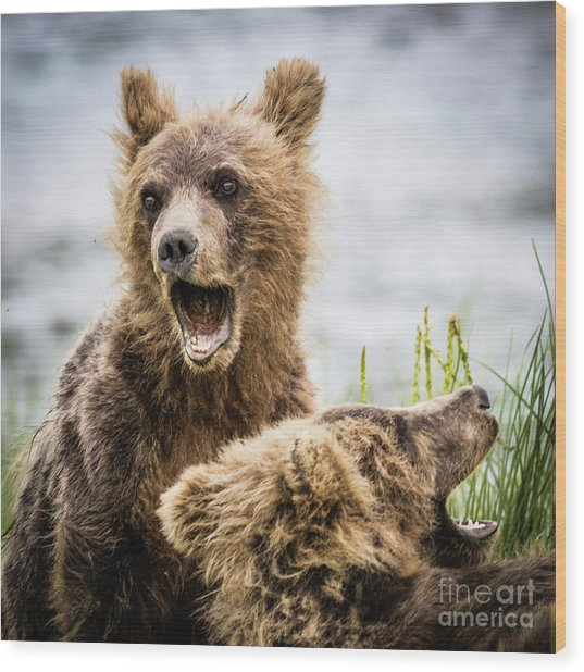 Grizzly Cubs Looking For Their Mum Wood Print