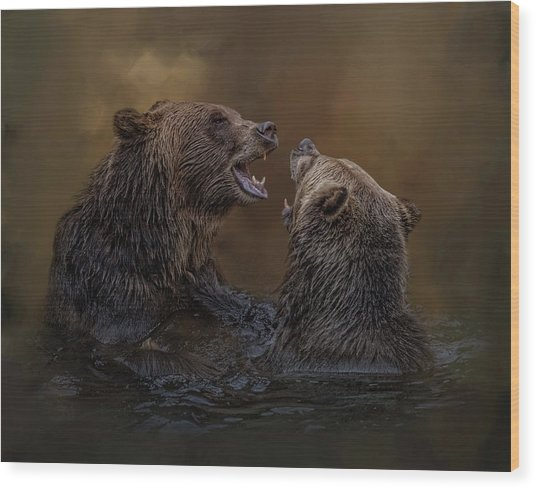 Grizzlies At Play Wood Print