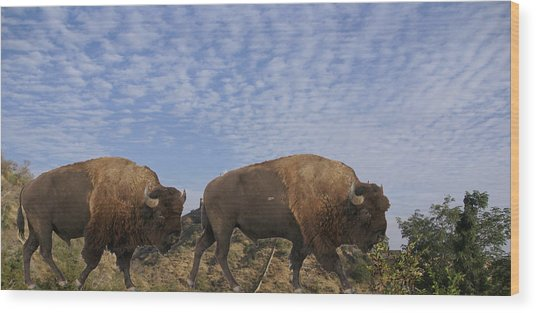 Group Of Bison Walking Against Rocky Mountains  Wood Print