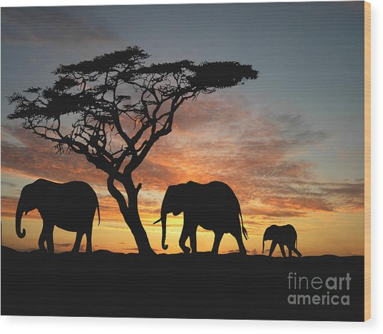 Group Of Elephant In Africa Wood Print