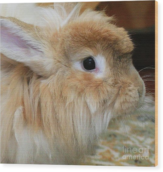 Hairy Rabbit Wood Print