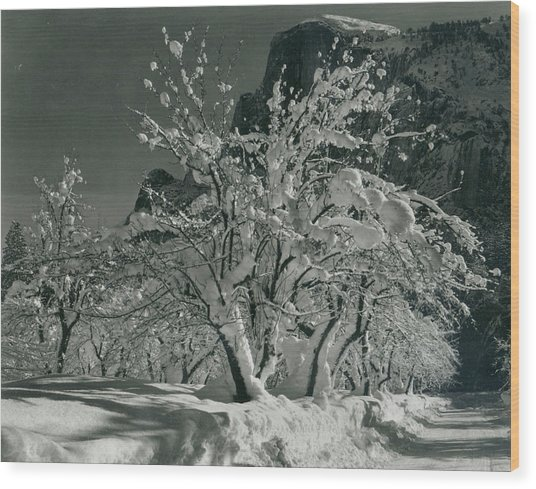 Half Dome, Apple Orchard, Yosemite Wood Print