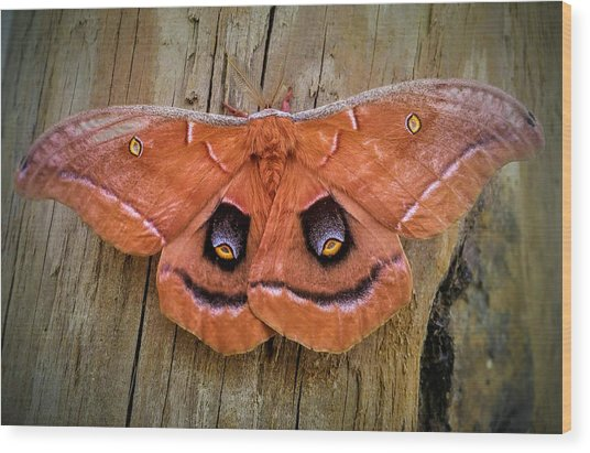 Halloween Moth Wood Print
