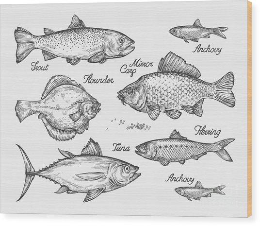 Hand Drawn Fish. Sketch Trout, Carp Wood Print