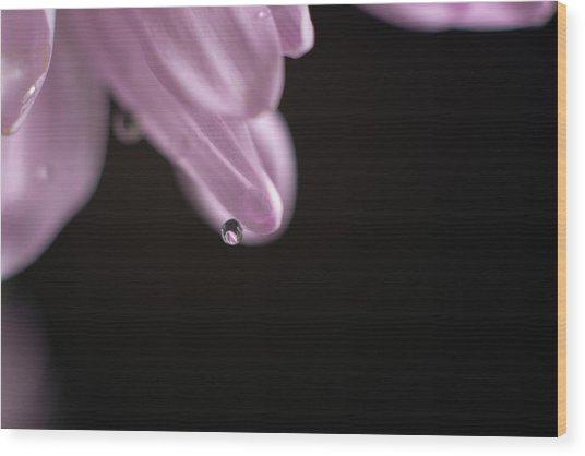 Hanging Water Droplet Wood Print
