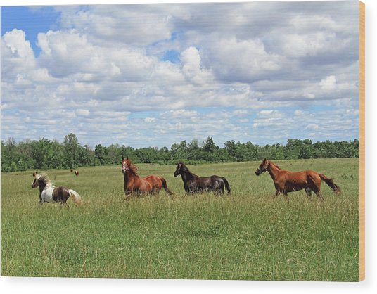 Happy Horses Wood Print by Corrie White Photography