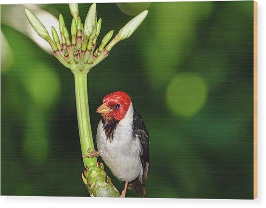 Happy Valentine's Day Bird Wood Print