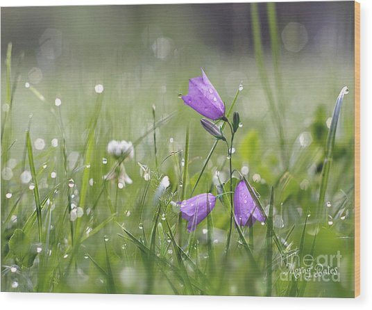 Harebells And Water Drops Wood Print