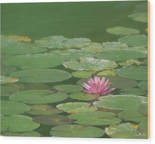 Harmonious Pink Waterlily Wood Print