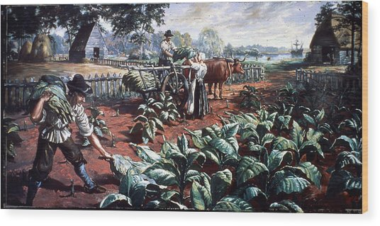 Harvesting Tobacco In Early Virginia Wood Print by Hulton Archive