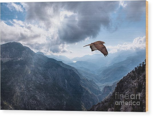 Hawk Flying Over The Mountains Wood Print