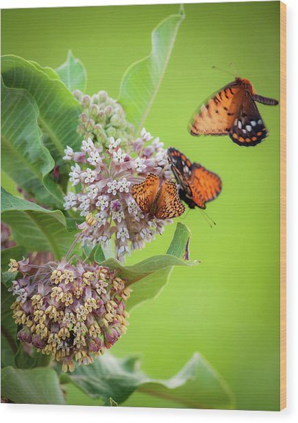 Head Over Heals For Milkweed Wood Print
