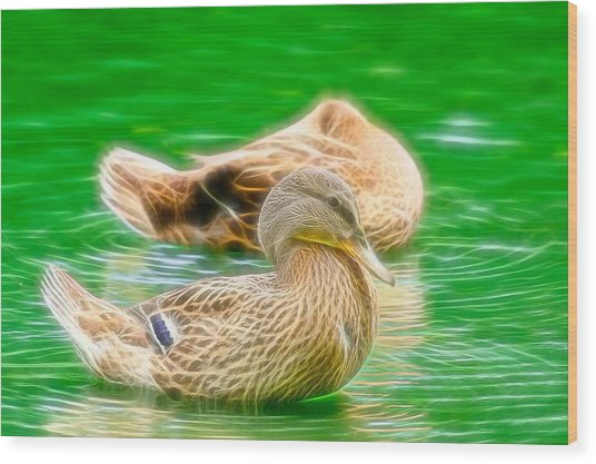 Headless Honey Duck Fibers Wood Print