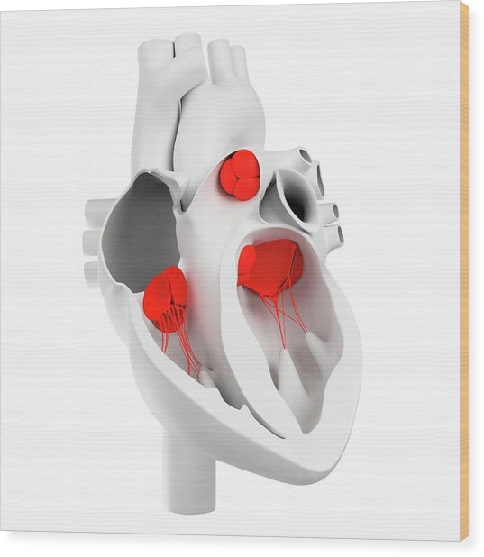 Heart Valves, Artwork Wood Print by Sciepro