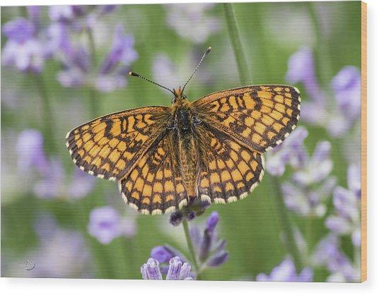 Heath Fritillary On The Lavender Wood Print