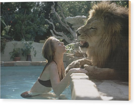 Hedren & Neil The Lion Wood Print by Michael Rougier