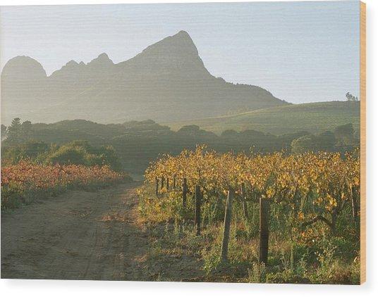 Helderburg Vineyard Wood Print